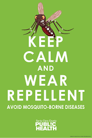 Image result for chikungunya English