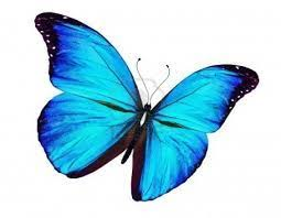 <b>butterfly</b> | Blue <b>butterfly</b>, <b>Butterfly</b>, Freedom is a <b>state of mind</b> - Pinterest