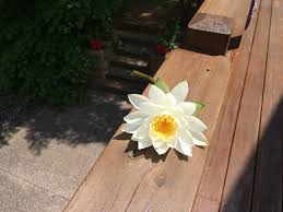 summer vacation inspired writing prompts for you the practice someone picked this flower from the lake who picked it who is it for