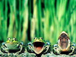 「蛙 画像」の画像検索結果