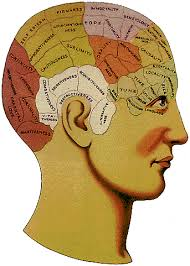 evaluation of phrenological