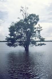 Araguaia River