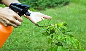 Resultado de imagen para Fungicidas ecológicos  LECITINA DE SOJA