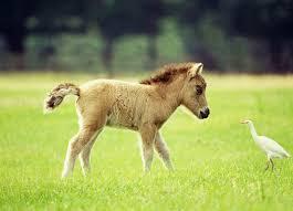 Resultado de imagen de caballos