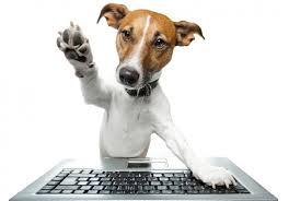 Computação para animais de estimação!