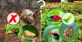 Средства защиты от насекомых (<b>инсектициды</b>)