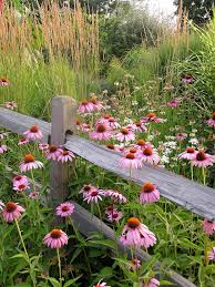Small Picture Plant Wildflowers in Your Garden and Keep Them Tidy and Organized