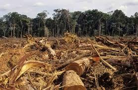 deforestation   effects  prevention steps  essay  speechdeforestation   effects  prevention steps  essay  speech  paragraph