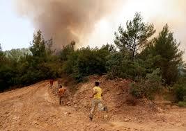 İzmir'deki yangında 100 hektar alan zarar gördü