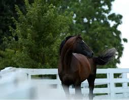 Racing <b>Hall</b> of Famer <b>Cigar</b> Dead – The Horse
