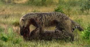 Resultado de imagem para Hyaenodon