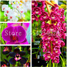 Shop Orchid Red - Great deals on Orchid Red on AliExpress