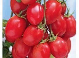 <b>Семена Томат Блиц F1</b> серия Урожай на окне: описание сорта ...