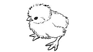 Small Picture Baby Chick Coloring Pages Syougitcom