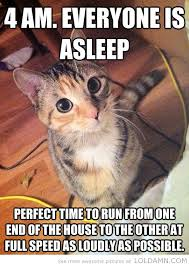 outstanding Funny Quotes About Cats - wonderful Inspirational ...