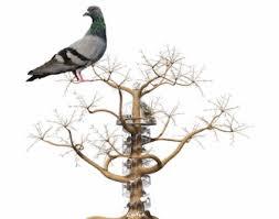 """Résultat de recherche d'images pour """"gifs bonne semaine pigeons"""""""