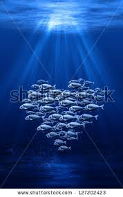 Image result for heart of fish
