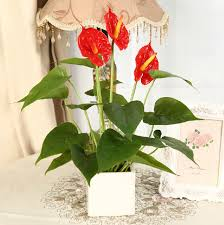 artificial plants anthurium lifelike flowers wedding home office decor artificial plants for office decor