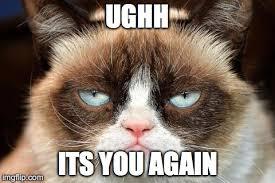 grumpy cat not amused Meme Generator - Imgflip via Relatably.com
