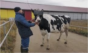 Коровам выдали <b>очки виртуальной реальности</b> для снижения их ...