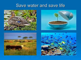 water essential to life on earth essay   reportzwebfccom water essential to life on earth essay