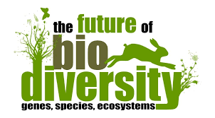 free essay on biodiversity    words