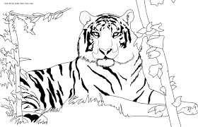 Small Picture Realistic Jungle Animals Coloring Pages Virtrencom