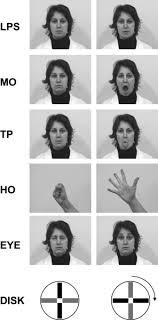 Neonatal <b>Imitation</b> in Rhesus Macaques