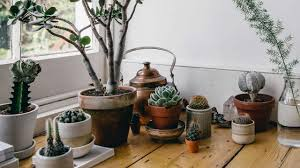 How to Care for <b>Succulents</b> (And Not Kill Them): 9 Plant-Care Tips ...