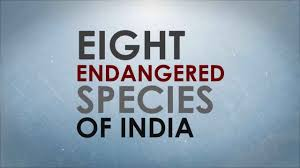 short essay on endangered species in