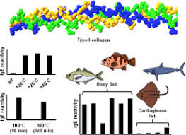 Allergy to <b>fish collagen</b>: Thermostability of collagen and IgE reactivity ...