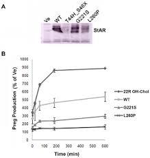 Characterization of Novel <b>StAR</b> (Steroidogenic Acute Regulatory ...
