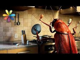 Как избавиться от тараканов навсегда? – Все буде добре ...