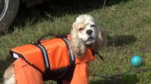 Спасательный <b>жилет для собак</b> - YouTube