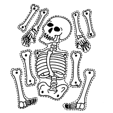 jointed skelton simple anatomy lesson or halloween craft halloween crafts