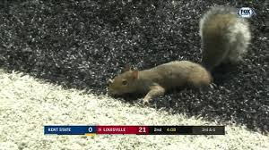 Instant Classic: Squirrel scores touchdown in Louisville-Kent State ...