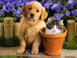 Animal Help Halki...