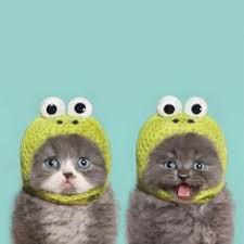 45 Best Cat <b>Funnies</b> images | <b>Funny cats</b>, I love cats, <b>Cute cats</b>