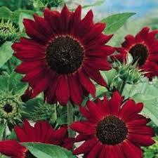 382 Best <b>Sunflowers</b> images | <b>Sunflower</b> kitchen, <b>Sunflower</b> kitchen ...