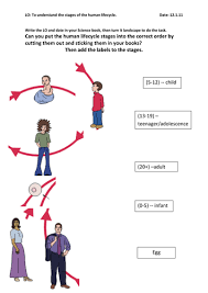 human life cycle by amusty   teaching resources   tes