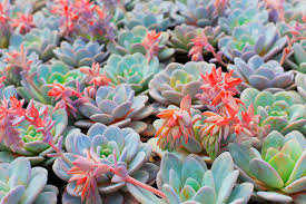 <b>succulent</b> | Definition, Facts, & Examples | Britannica
