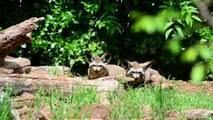 Learn Zoo Animals For Kids With <b>Zebra</b> Tiger Monkey <b>Crocodile</b> ...