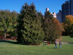 Image result for red cedar trees