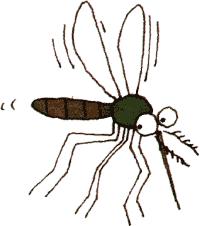 Bildergebnis für Mücke