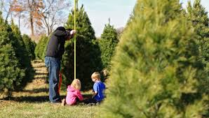 10 Tips on How to Choose & Cut Down Your Own Christmas Tree