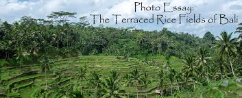 photo essay the terraced rice fields of bali