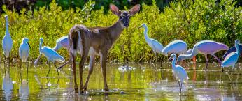 Home - National <b>Key</b> Deer Refuge - U.S. Fish and Wildlife Service