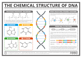 compound interest   the chemical structure of dnachemical structure of dna