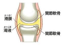 「膝滑液包」の画像検索結果