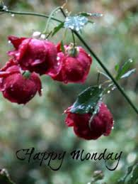 Image result for happy monday autumn cat